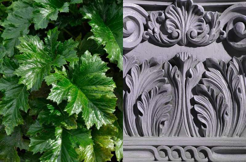 Акант, растение и орнамент